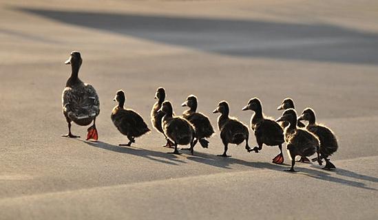 Blog followers, blogging, inbound marketing, b2b inbound