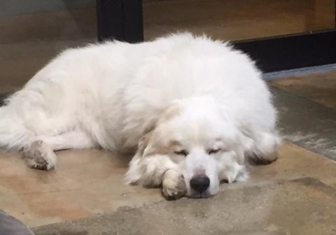 Dog napping at marketing agency in Atlanta