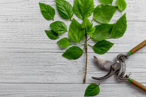 Pruning your SEO by cleaning up your links